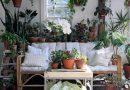 Eviniz için Uygun Bitki Seçimleri